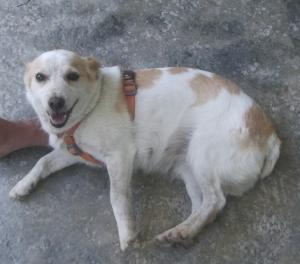 Adorable Lolita los angeles cantan al recibirte