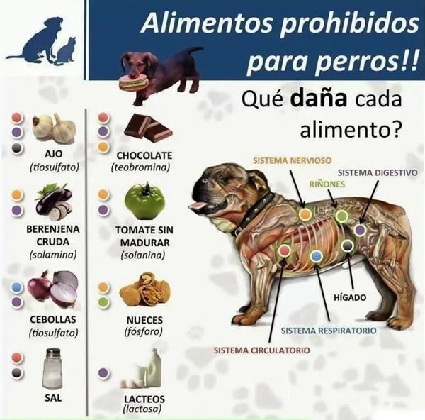 Salva una vida 12 alimentos toxicos para perros - Alimentos recomendados para perros ...